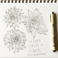 Dahlias-line-drawing_lores